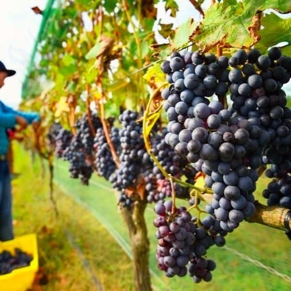Screen-Shot-2017-11-17-at-2.42.52-PM