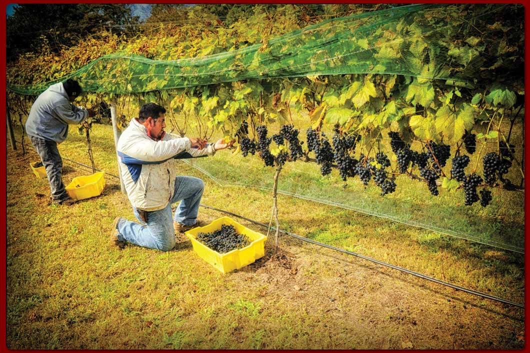 WillowCreekIndexSlide1