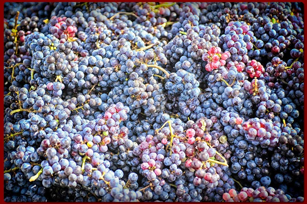WillowCreekIndexSlides5