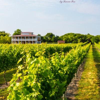 Willow-Creek-Winery-opener